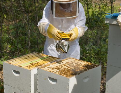 Bee Schools Are Abuzz